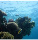 Les sports nautiques à Hurghada, Egypte