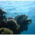 plongee sous-marine egypte